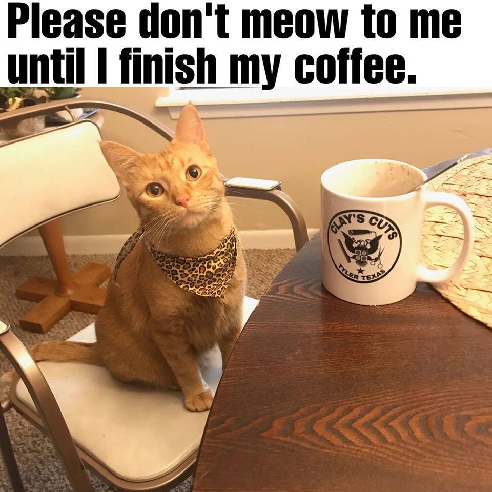 A signature, artisanal meme about a cat drinking coffee. Superb.